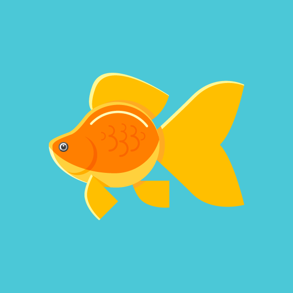 31 Things No. 05: Goldfish