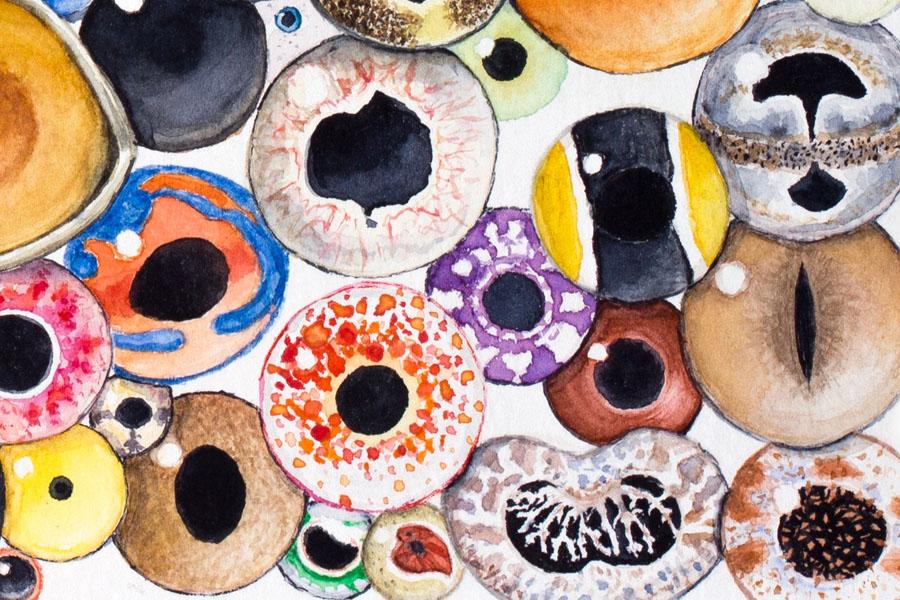 Animal eyes watercolor painting detail 4