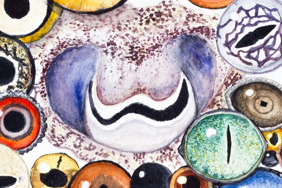 Animal eyes watercolor painting detail 3