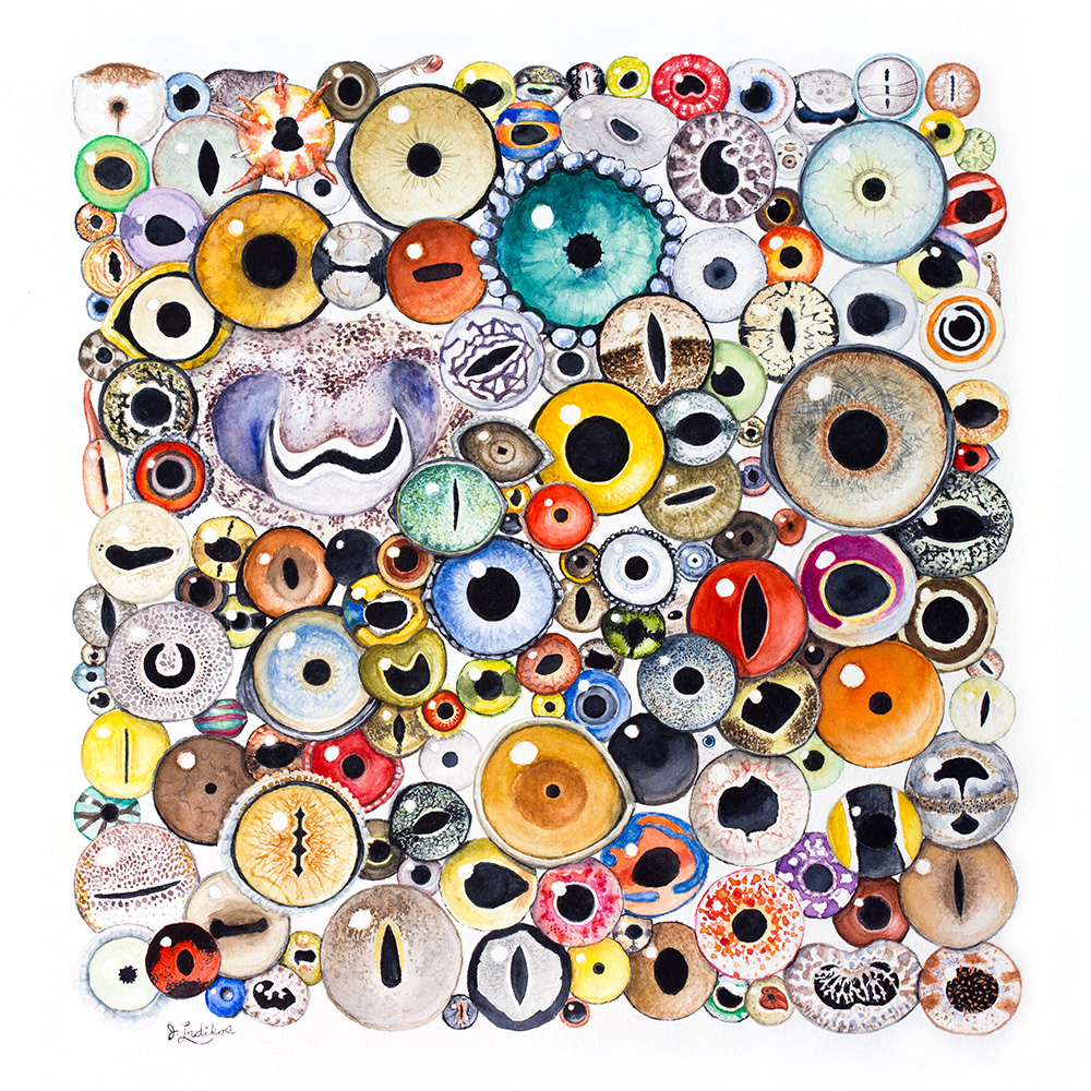 Watercolor painting of 150 different animal eyes